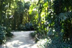 bambouseraie_2